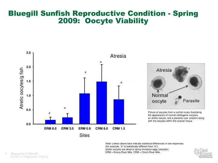 Bluegill Sunfish Reproductive Condition - Spring 2009: