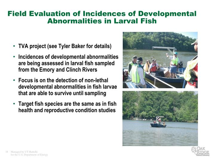 Field Evaluation of Incidences of Developmental Abnormalities in Larval Fish