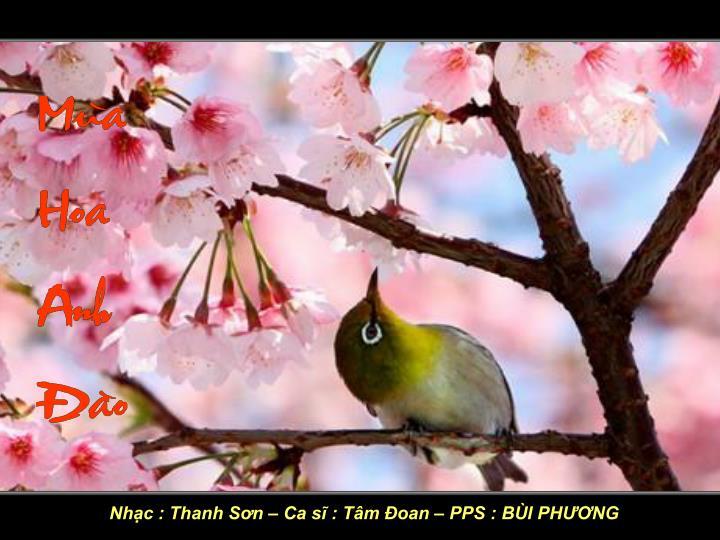 Nhạc : Thanh Sơn – Ca sĩ : Tâm Đoan – PPS : BÙI PHƯƠNG