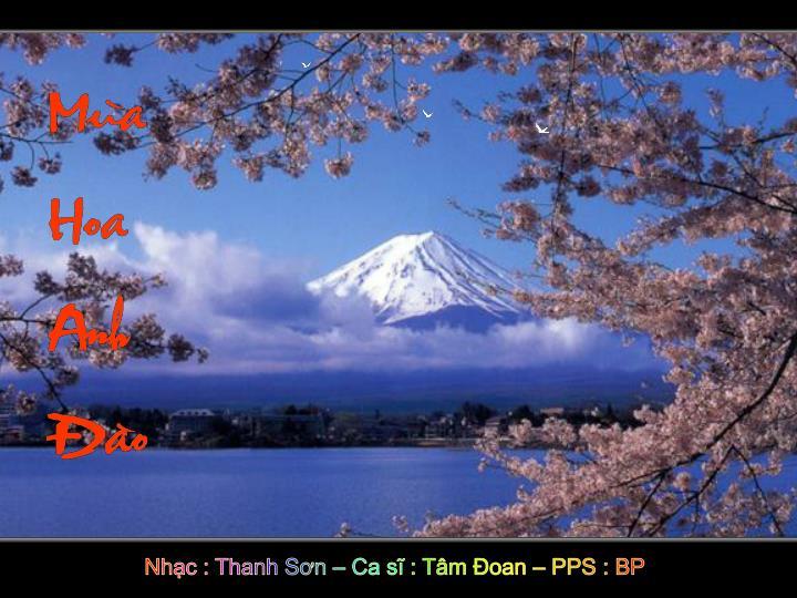 Nhạc : Thanh Sơn – Ca sĩ : Tâm Đoan – PPS : BP