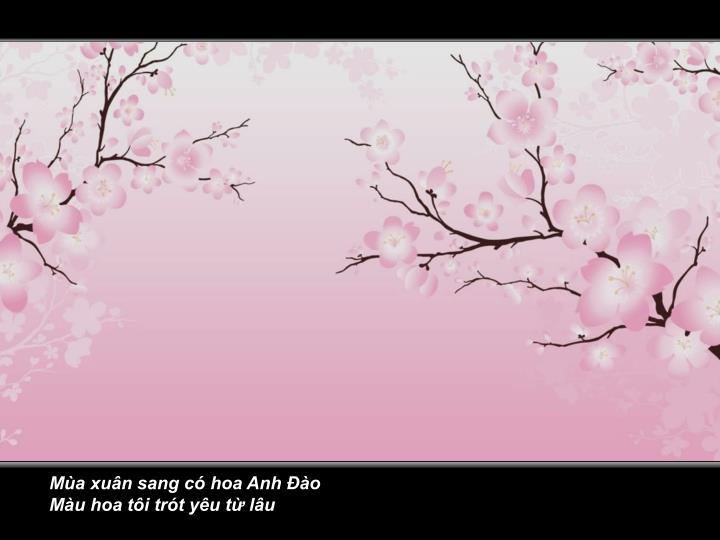 Mùa xuân sang có hoa Anh Đào