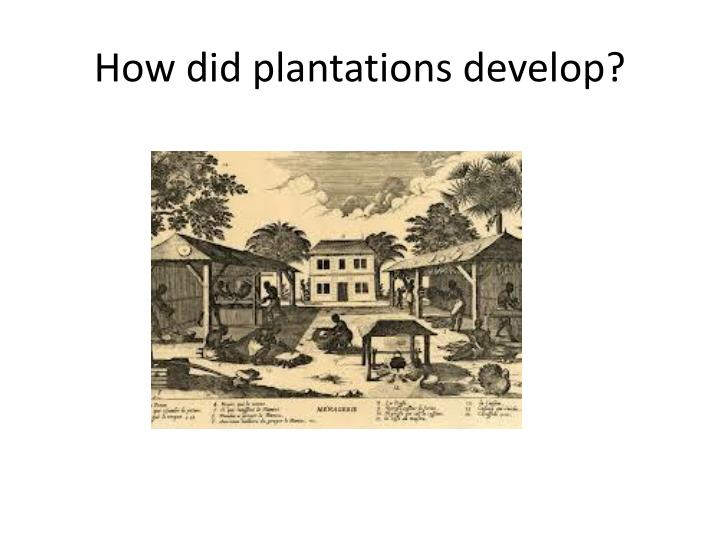 How did plantations develop?