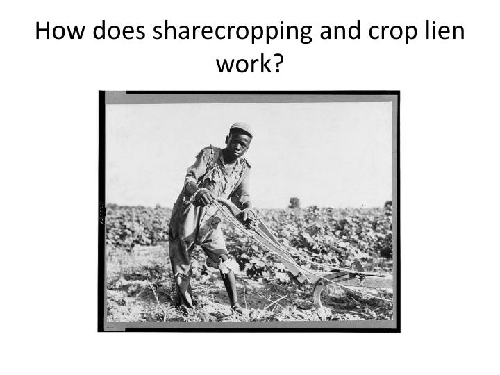 How does sharecropping and crop lien work?