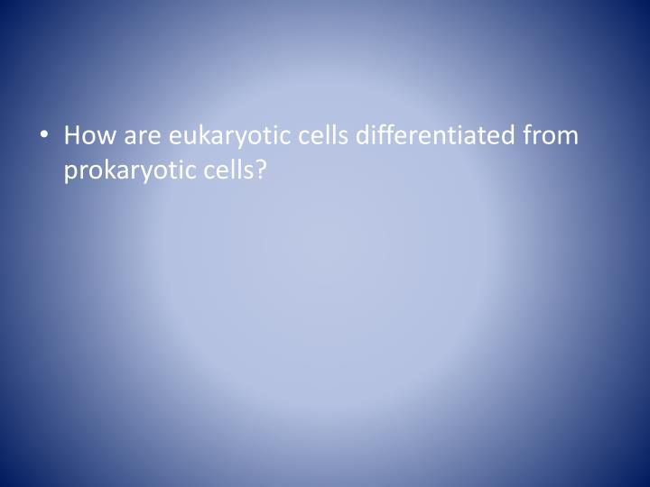 How are eukaryotic cells