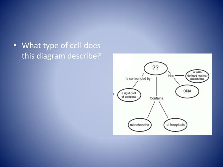 What type of cell does this diagram describe?