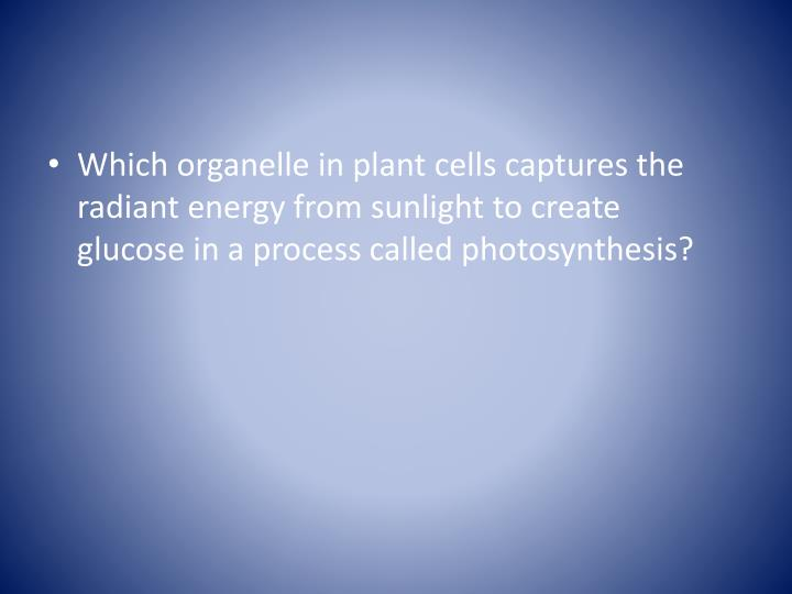 Which organelle in plant cells captures the radiant energy from sunlight to create     glucose in a process called photosynthesis?