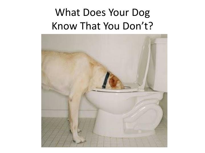 What Does Your Dog