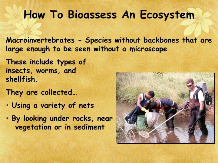 How To Bioassess An Ecosystem