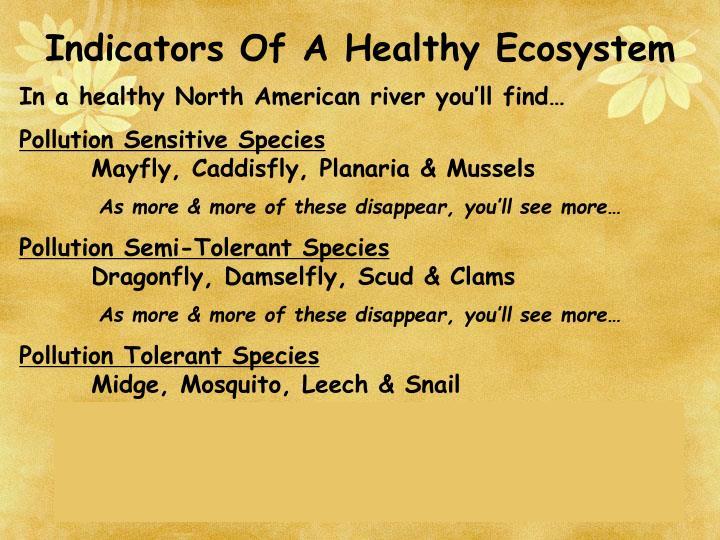 Indicators Of A Healthy Ecosystem