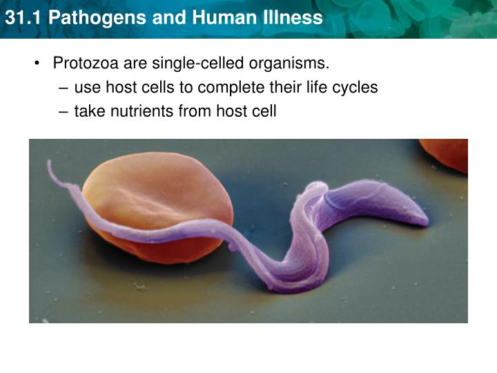 use host cells to complete their life cycles