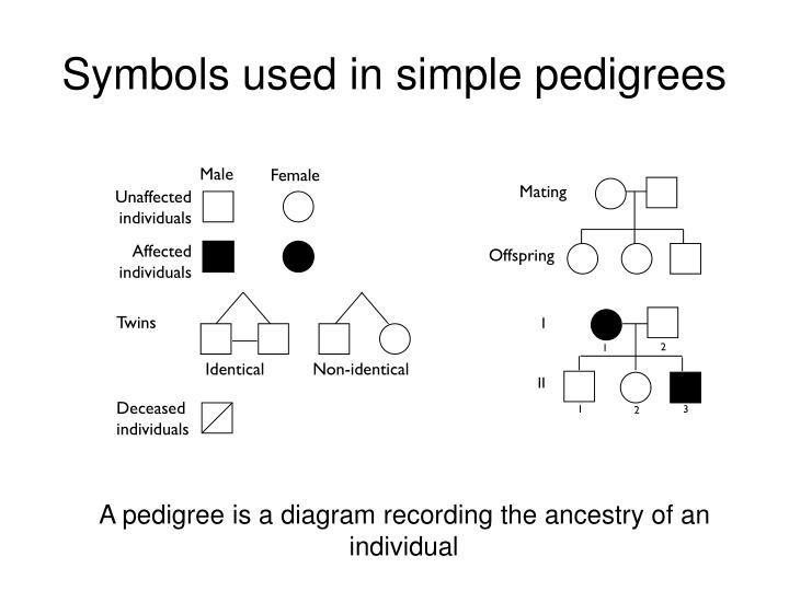 Symbols used in simple pedigrees