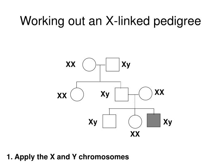 Working out an X-linked pedigree