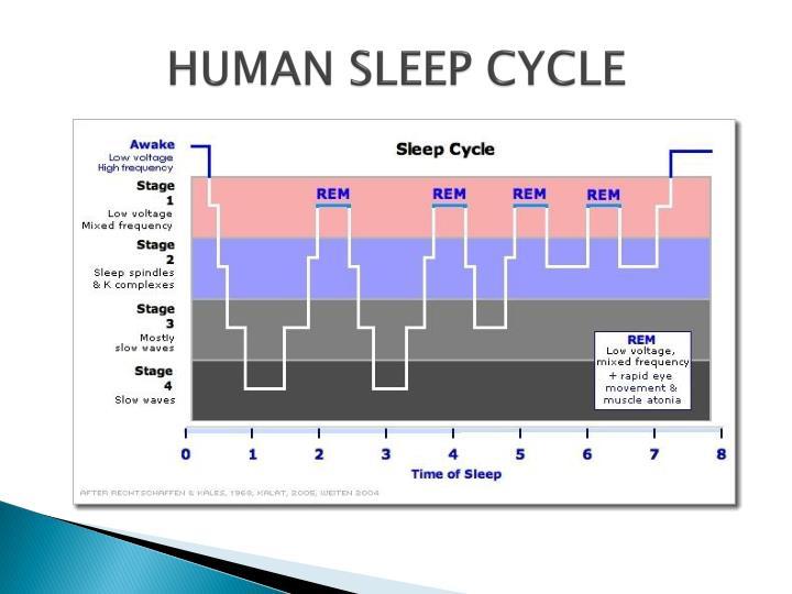 HUMAN SLEEP CYCLE