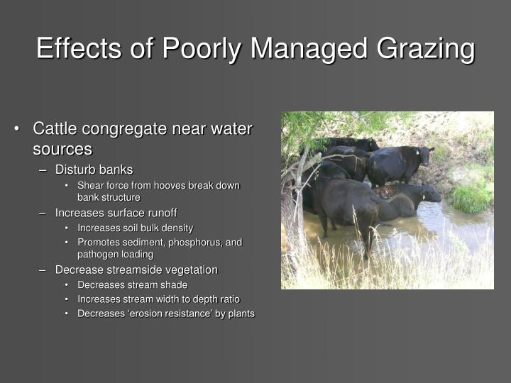 Effects of Poorly Managed Grazing