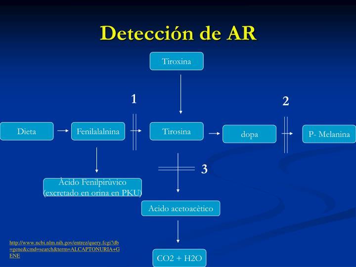 Detección de AR
