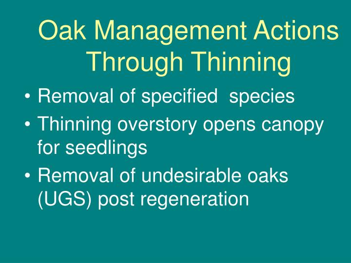 Oak Management Actions Through Thinning