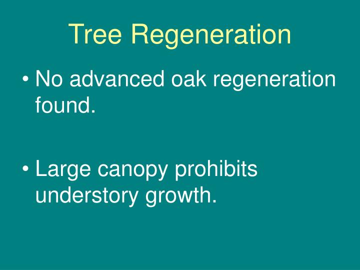 Tree Regeneration