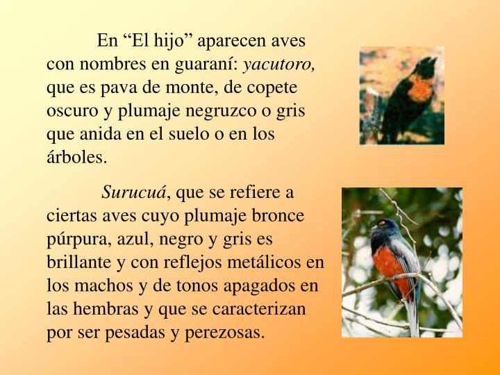 """En """"El hijo"""" aparecen aves con nombres en guaraní:"""