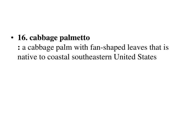 16. cabbage palmetto