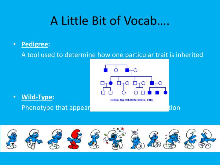A Little Bit of Vocab….