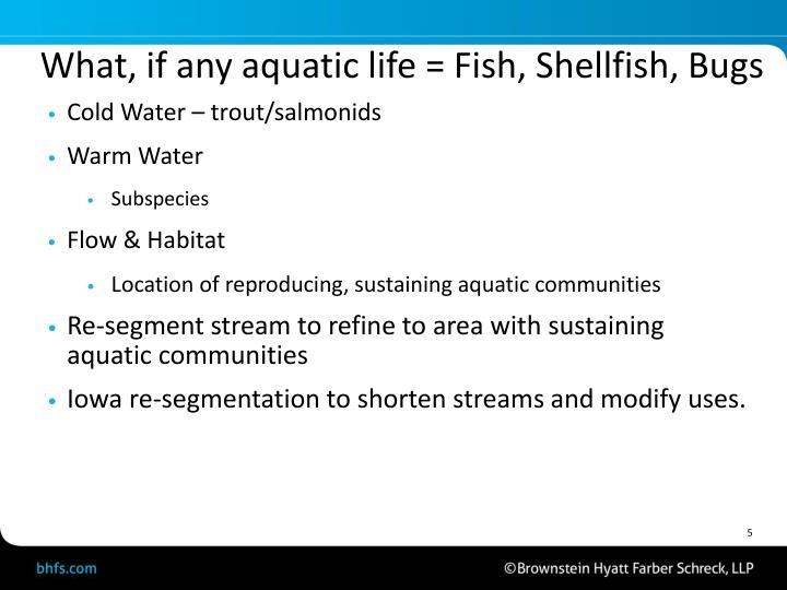 What, if any aquatic life = Fish, Shellfish, Bugs