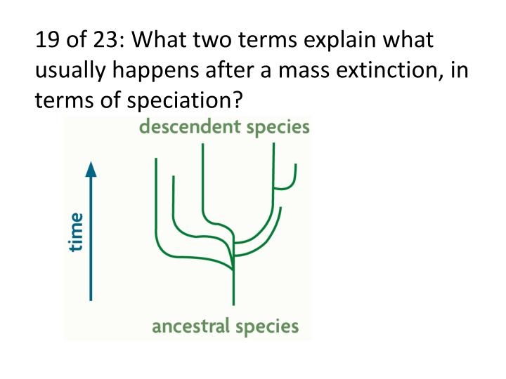 19 of 23: What two terms explain what usually happens after a mass extinction, in terms of speciation?