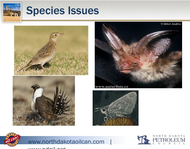 Species Issues