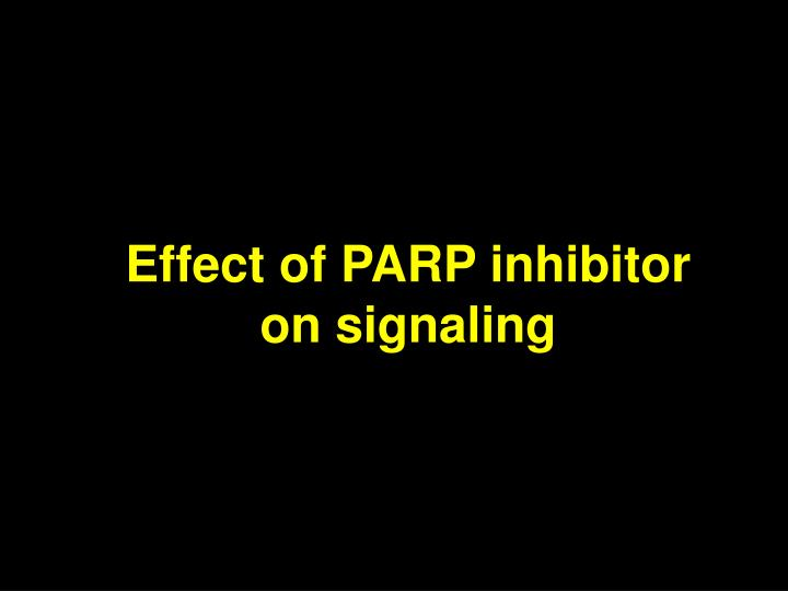 Effect of PARP inhibitor