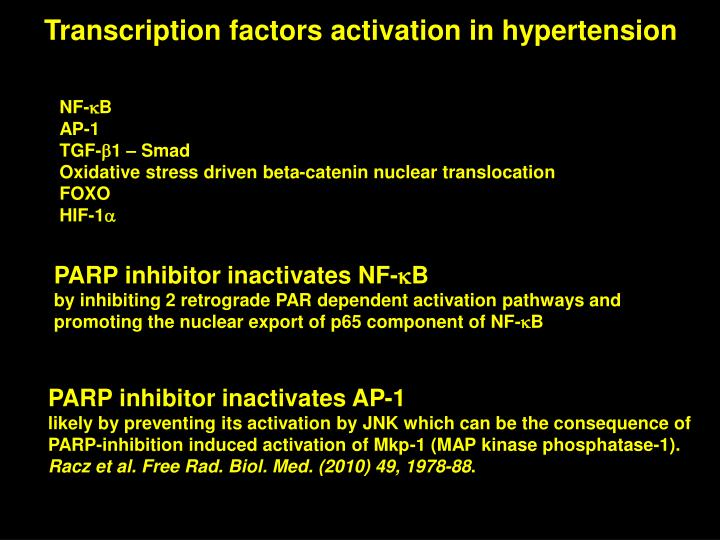 Transcription factors activation in hypertension