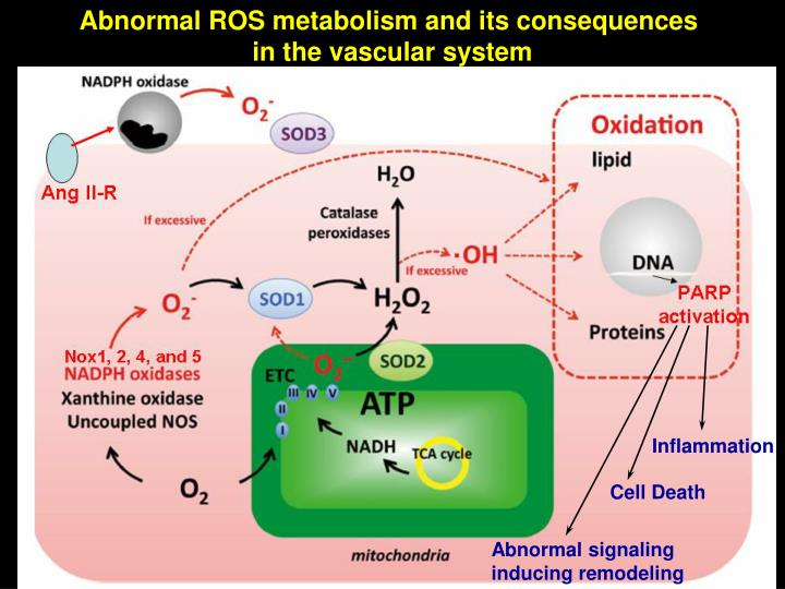 Abnormal ROS metabolism and its consequences