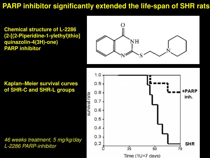 PARP inhibitor significantly extended the life-span of SHR rats