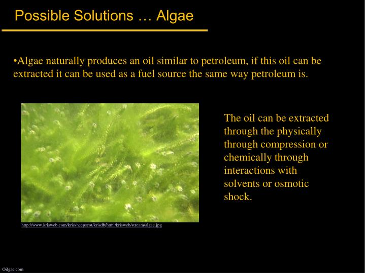 Possible Solutions … Algae