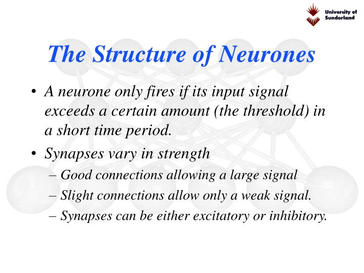 The Structure of Neurones