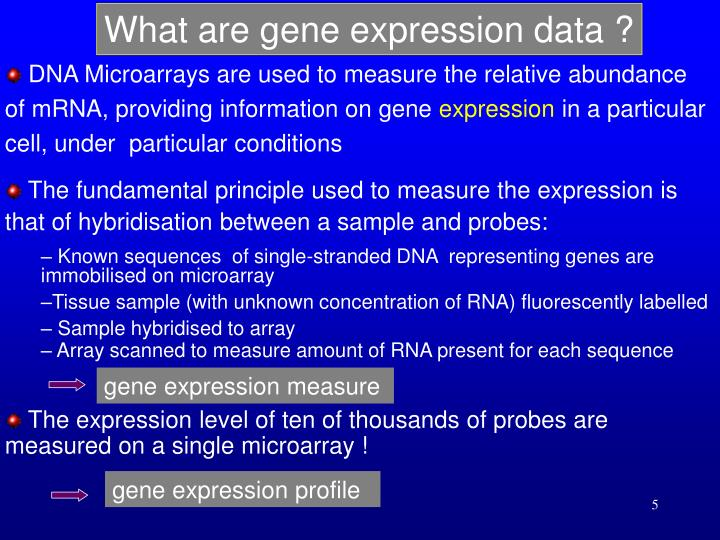 What are gene expression data ?