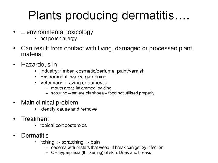 Plants producing dermatitis….