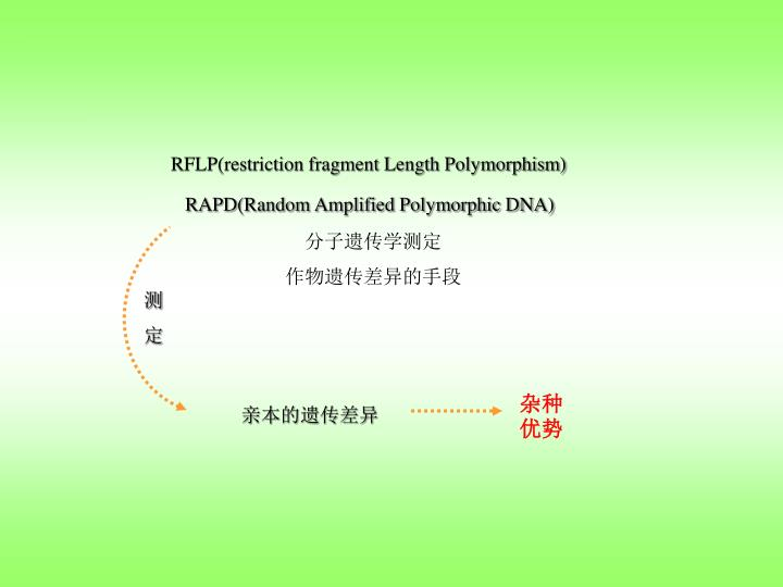 RFLP(restriction fragment Length Polymorphism)