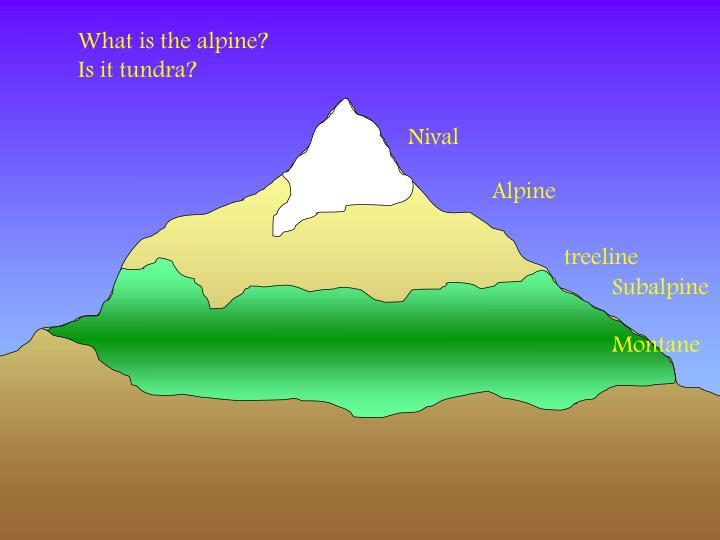 What is the alpine?