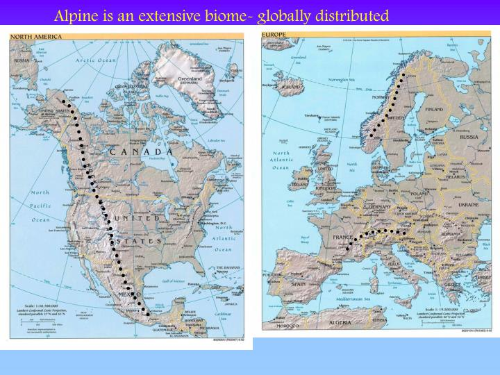 Alpine is an extensive biome- globally distributed