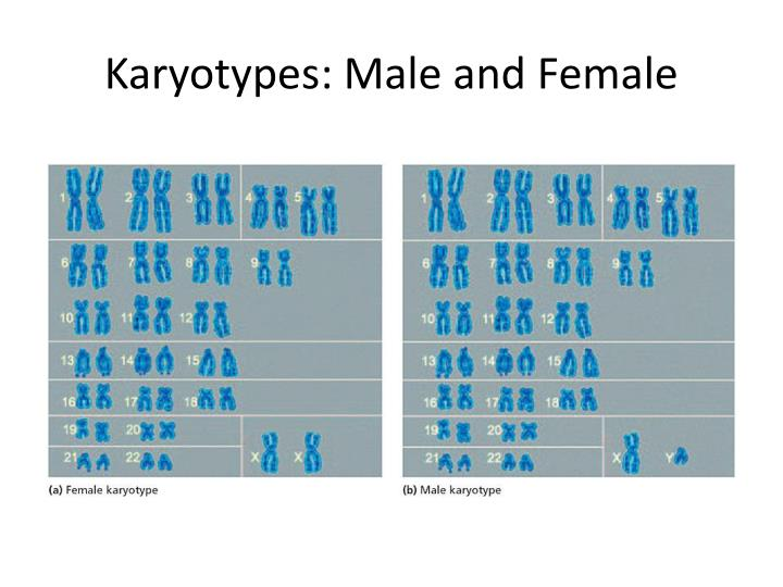 Karyotypes: Male and Female