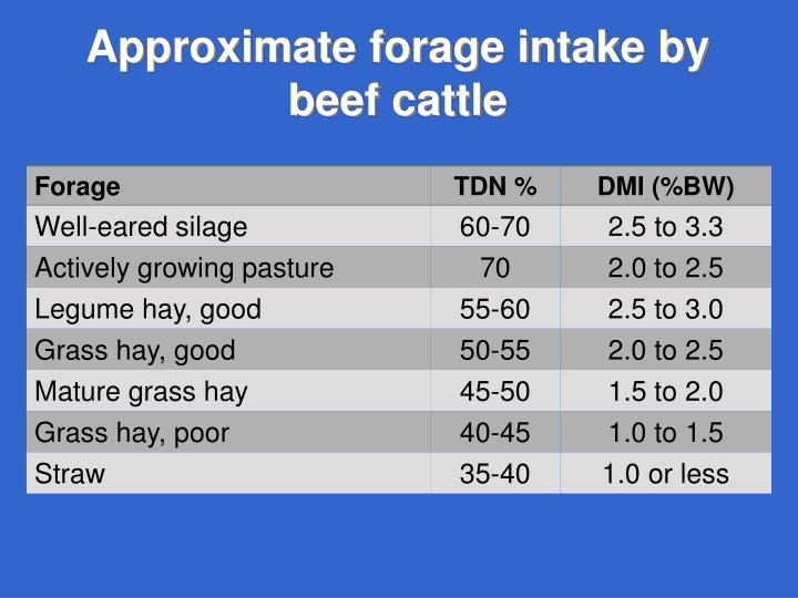 Approximate forage intake by beef cattle