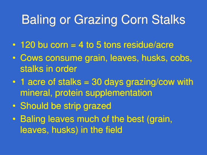 Baling or Grazing Corn Stalks