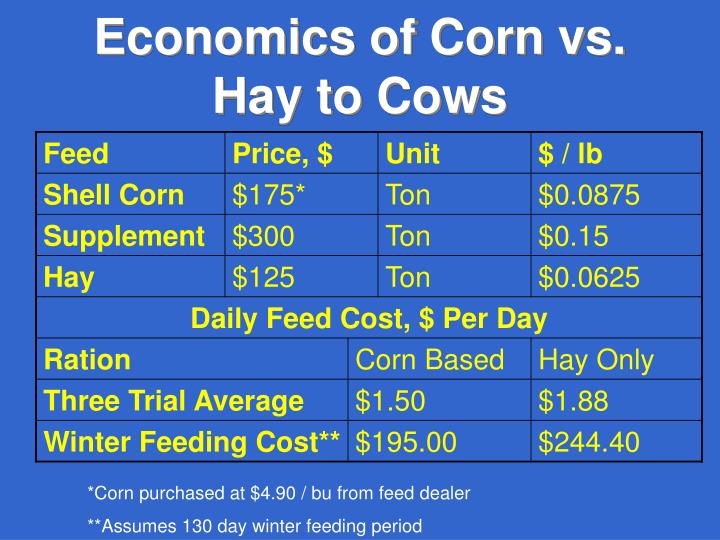 Economics of Corn vs. Hay to Cows