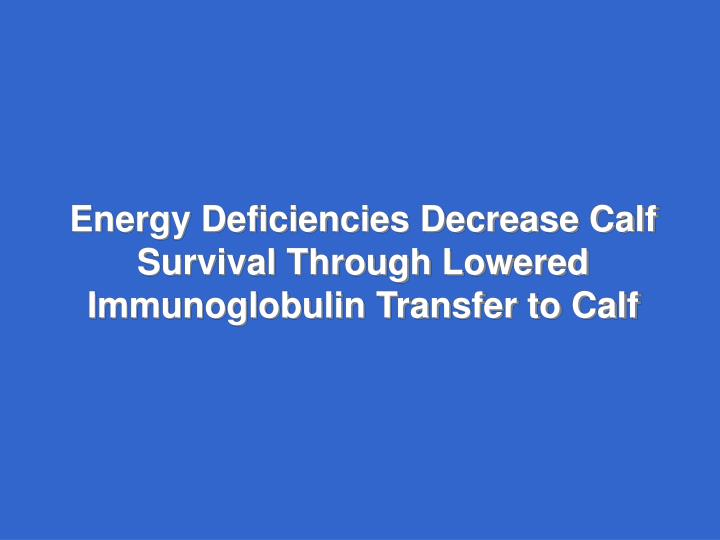 Energy Deficiencies Decrease Calf Survival Through Lowered Immunoglobulin Transfer to Calf