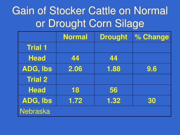 Gain of Stocker Cattle on Normal or Drought Corn Silage