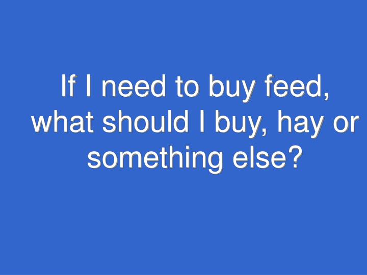 If I need to buy feed, what should I buy, hay or something else?