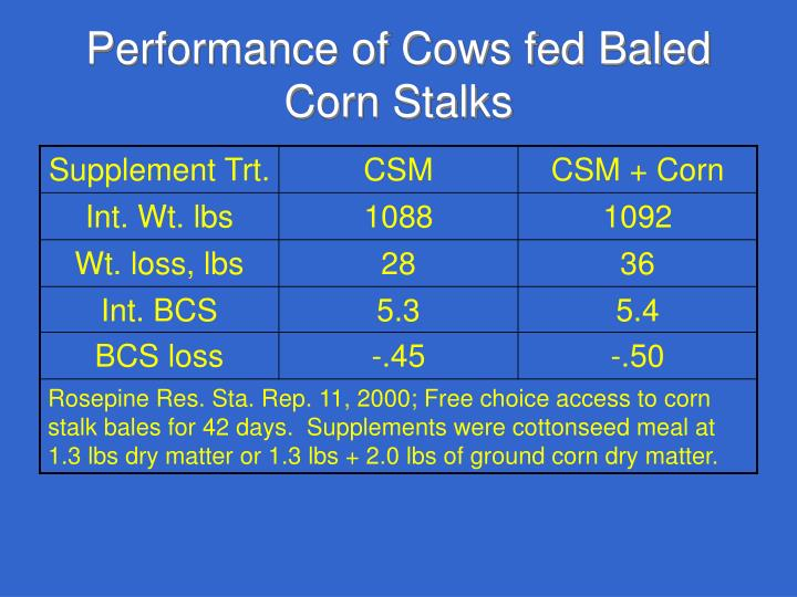 Performance of Cows fed Baled Corn Stalks