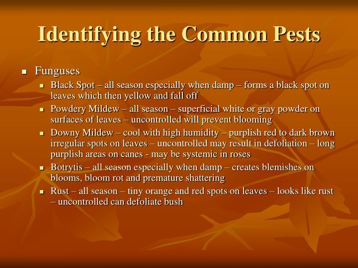 Identifying the Common Pests