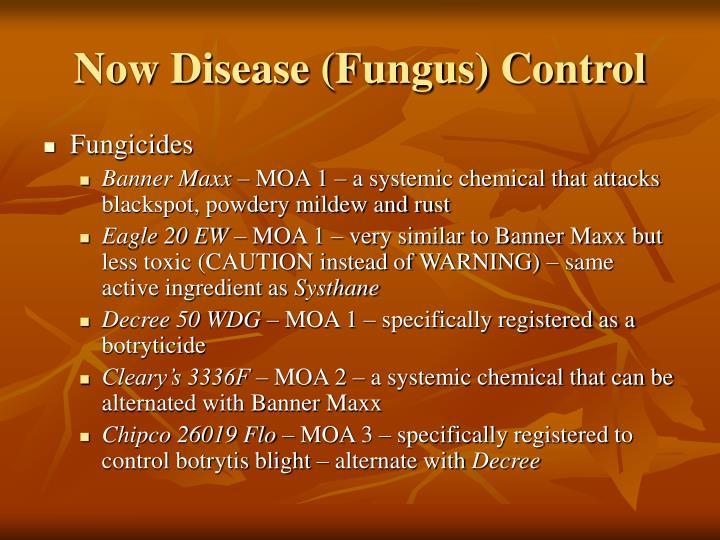 Now Disease (Fungus) Control