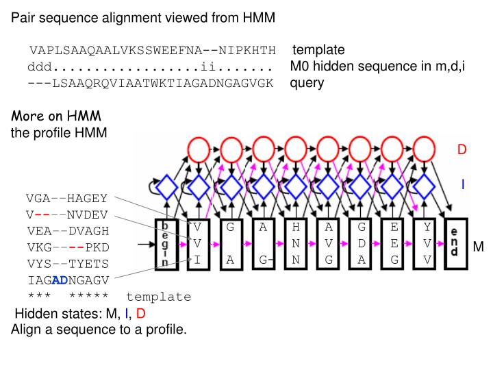 Pair sequence alignment viewed from HMM