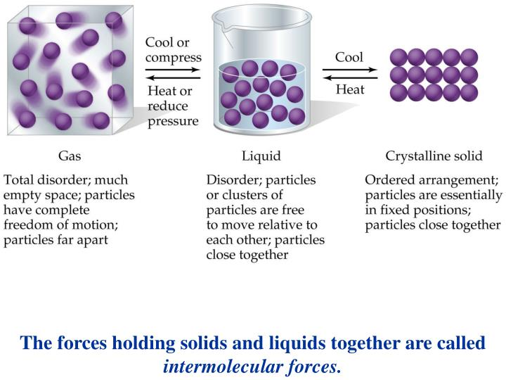 The forces holding solids and liquids together are called